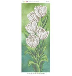 Білі тюльпани (част. виш.) ([ПМ 4101])